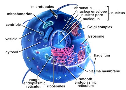 picture of a cell