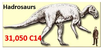 Hadrosaurs-Soft-Tissue-Carbon-dating