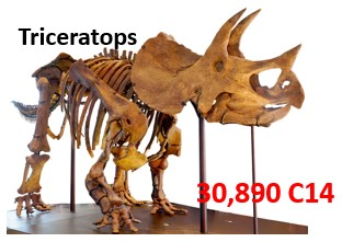 triceratops-Carbon-dating