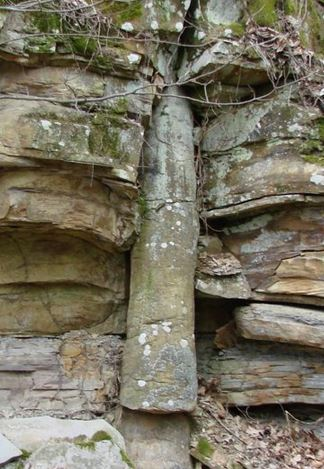 Tree-Vertical-Sedimentary-Layers2