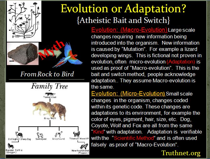 Evolution_or_Adaption