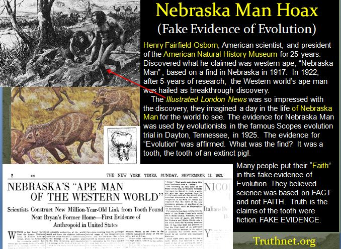 Nebraska_Man_Evolution